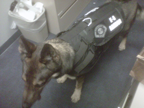 Anaheim PD K9 Cisko, photo by his partner, Officer Bonczkiewicz