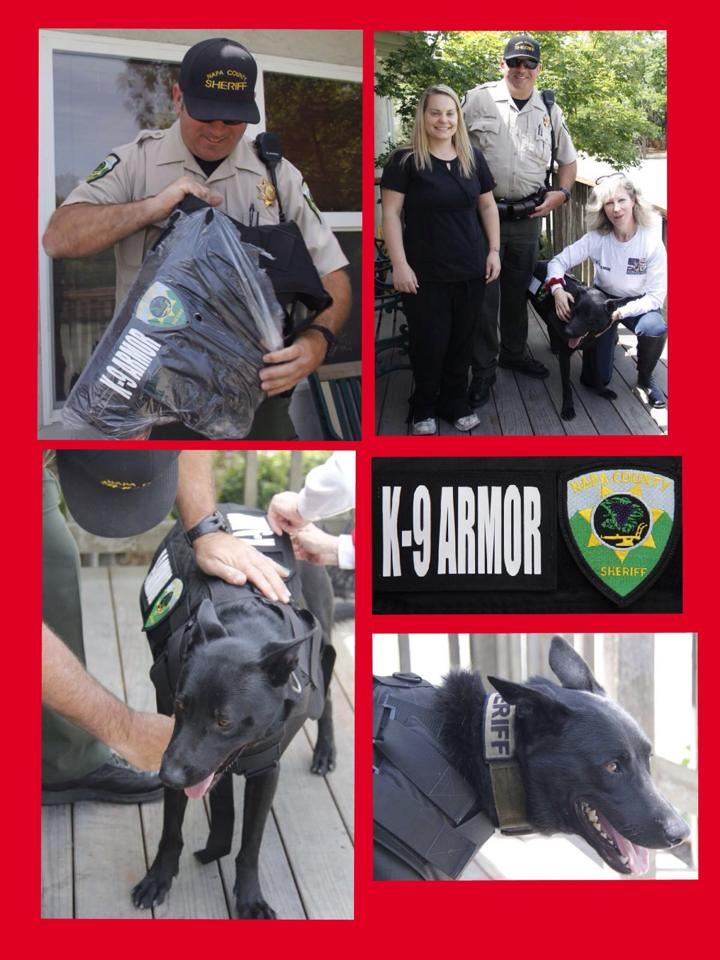 Napa County Sheriff K9 Nash receiving a K9 Armor bulletproof vest paid for by his veterinary technician Nadya Simon and delivered at the St Helena Veterinary Hospital on Deputy Thompson's birthday.