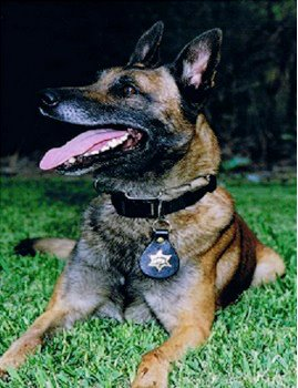 K9 Falco, Orange County Sheriff's Department