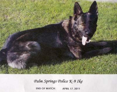 Palm Springs PD K9 Ike